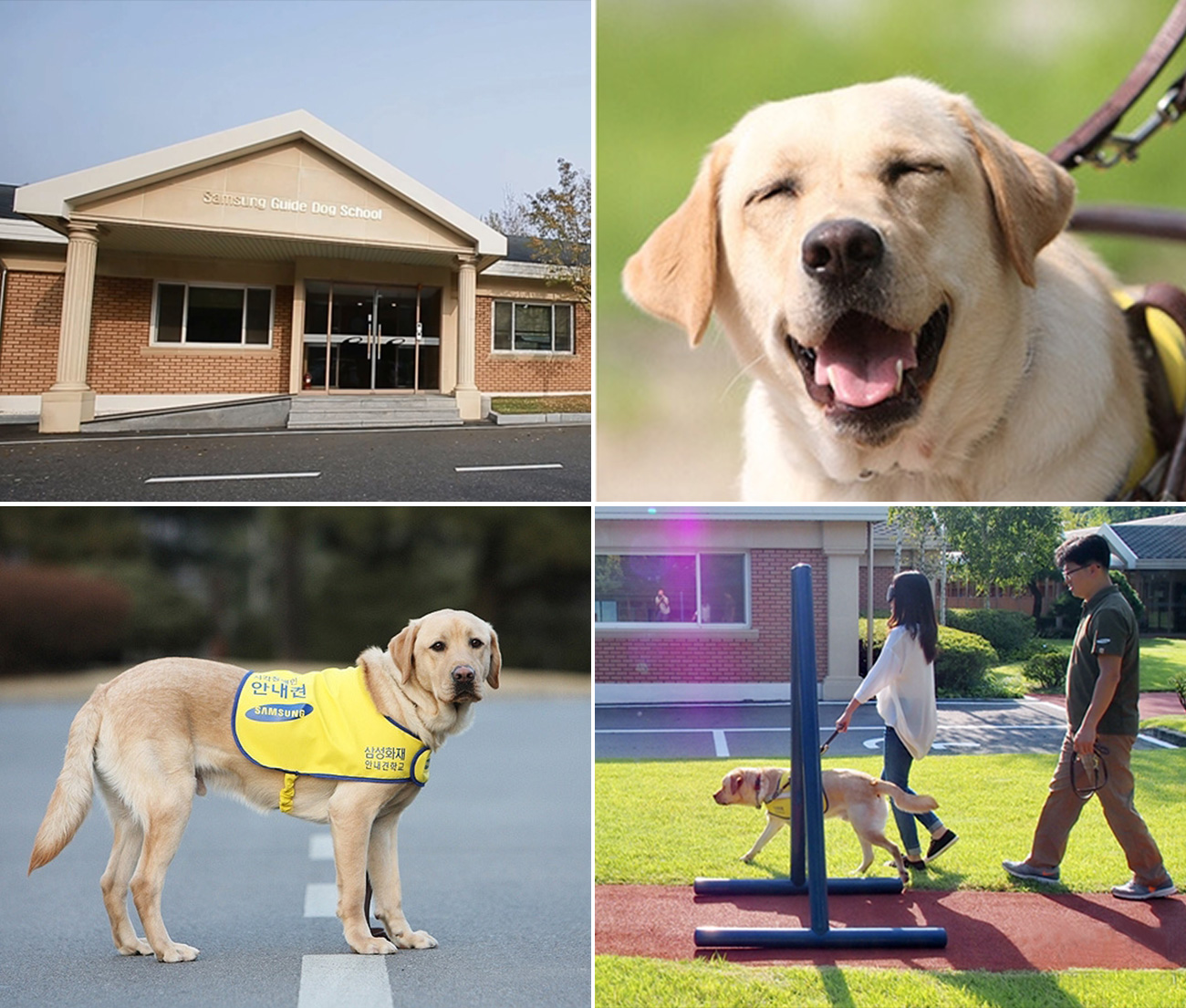School For Training Guide Dogs