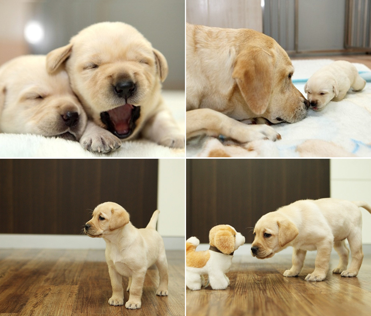 Southeastern Guide Dogs - Home | Facebook