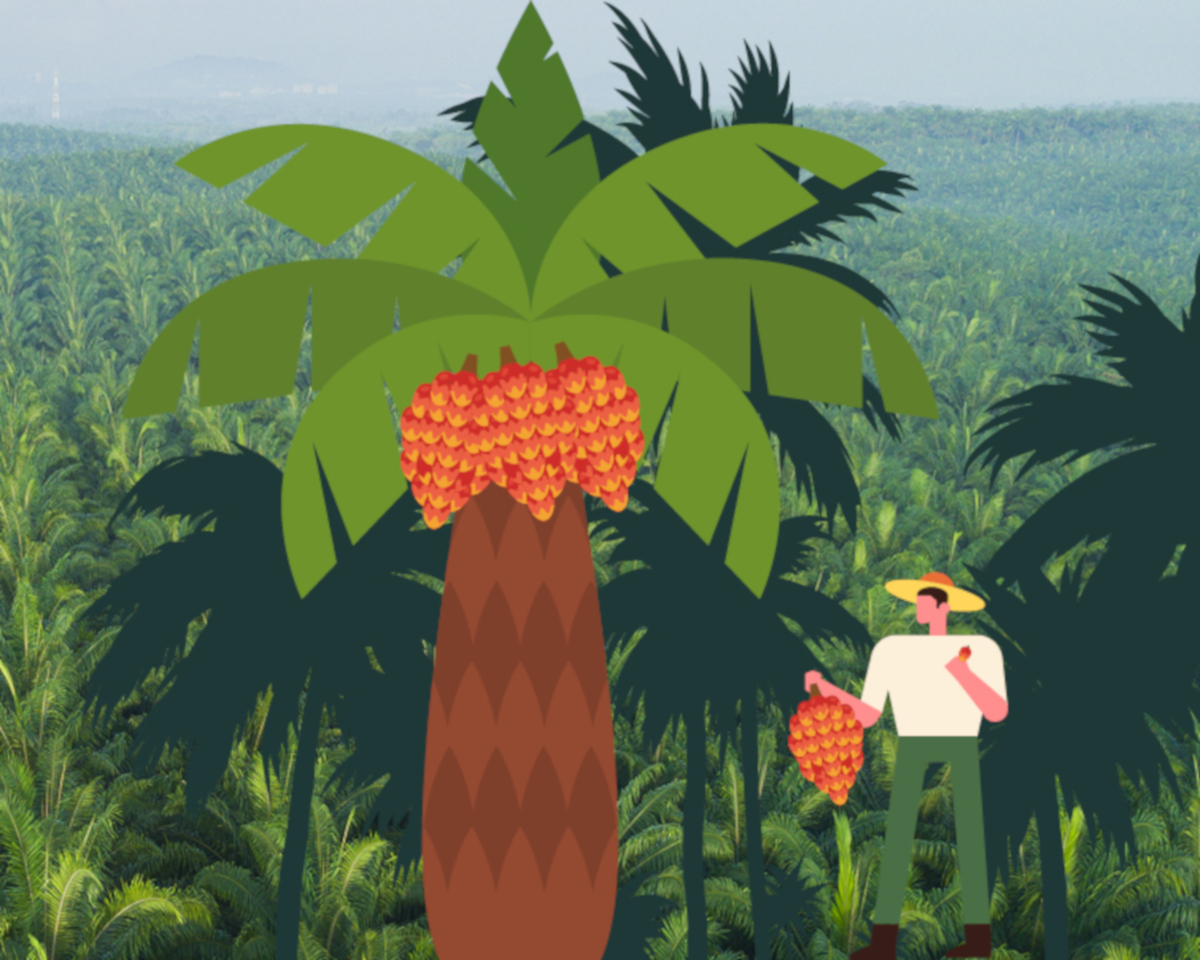 RSPO-4-featured-image-1200x959
